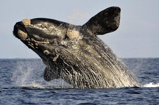 Private Cape Riviera and Whale...