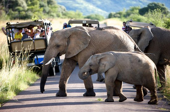 Pilanesberg Game Reserve Private Day ...
