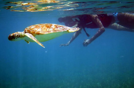 St Thomas Sea Turtle Snorkel Tour...