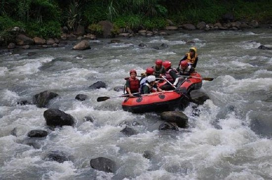 Private Tour of Progo River Rafting...