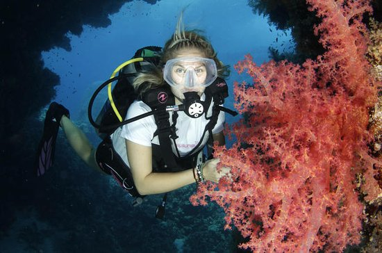5-Day Dive Pack for Certified Divers