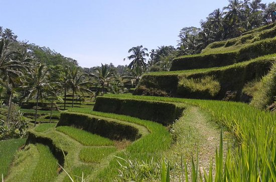 Ubud Cultural Day Tour: A Day for...