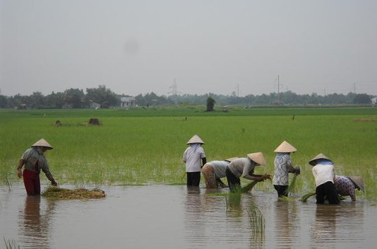 Mekong Delta 3-Day Small Group Tour...