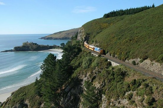 Dunedin Shore Excursion: Coastal...