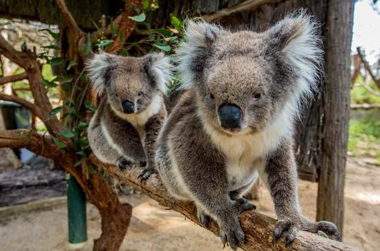 Cleland Wildlife Park: Tour ab ...