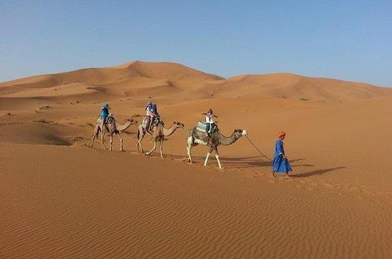 Kleingruppen-Wüstentour von Fes mit...