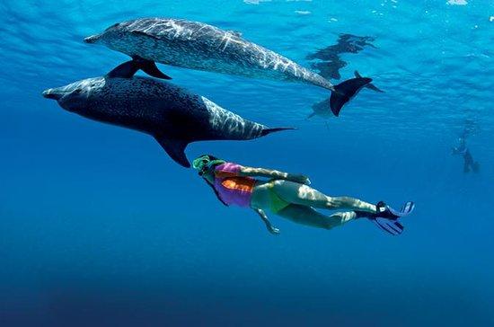 Demi-journée de nage avec les dauphins