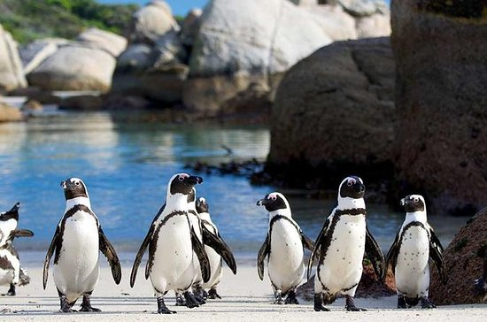 Private Tour: Cape of Good Hope and...