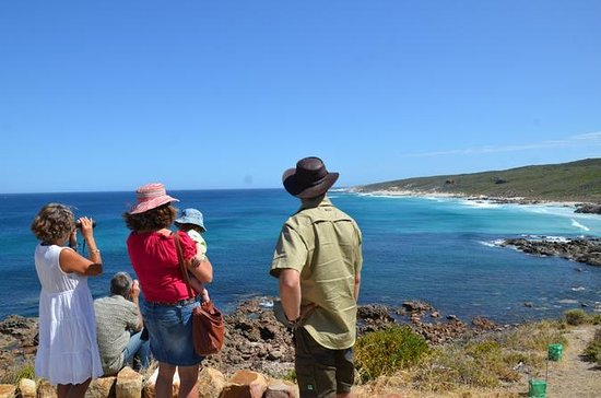 Margaret River Coastal and Wildlife Eco Trip from Busselton or...