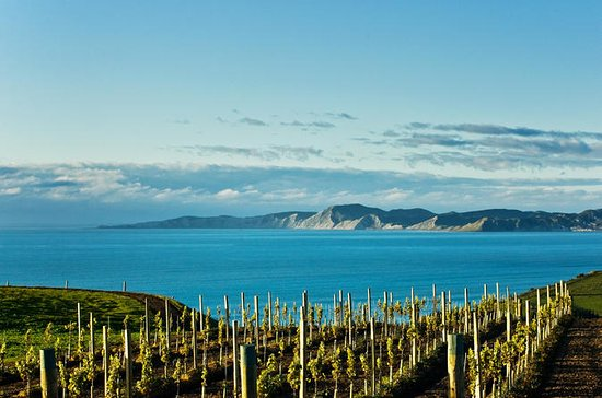 Shore Excursion: Blenheim Wine Tour...