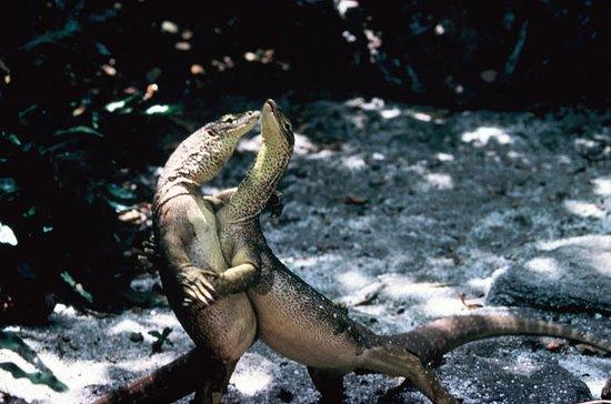 Lizard Island Day Trip by Scenic...
