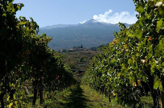 Etna y Wine Tour desde Catania