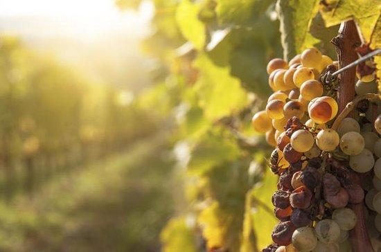 Private Tour: Tokaj Wine Country Day...