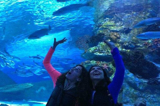 Antalya Aquarium including Hotel...