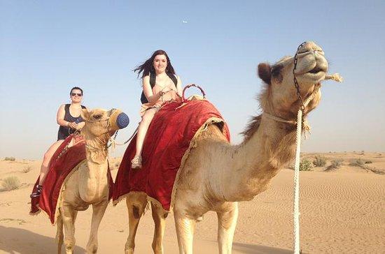 Safariopplevelse i Dubai med kameltur