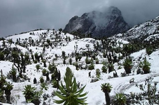 12 Day Rwenzori Trek with Safari