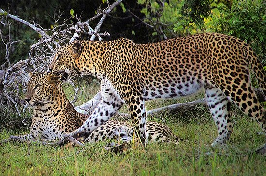 Private Tour: Wilpattu National Park...