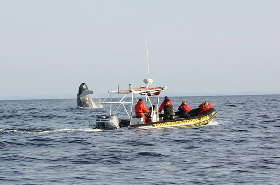 Whale Watching Tour with 2-Nights...