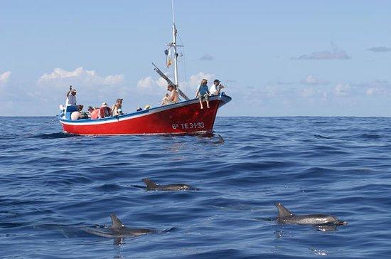 Walvissen en dolfijnen kijken op de ...