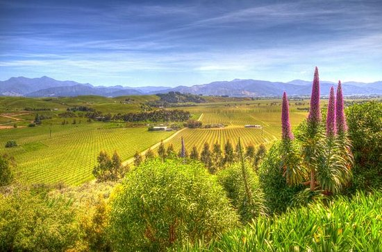Full-Day Wine Gourmet and Scenic ...