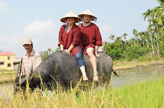 Half-Day Rice Paddy Experience from