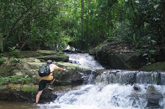 6-Hour Hike and Bike in Doi Suthep Pui National Park Combo from...