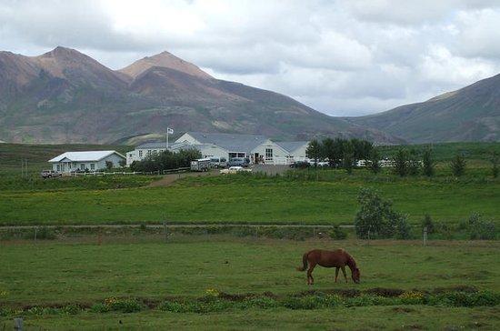 Equitazione con un cavallo islandese
