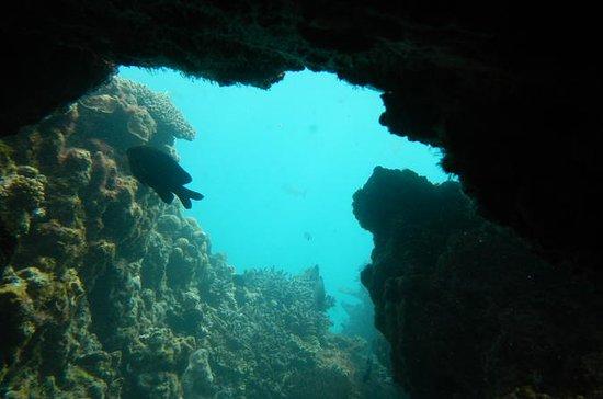 Halbtägige Abrolhos-Inseln...
