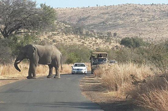 Pilanesberg National Park Safari from ...