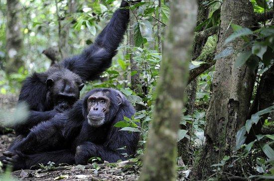 10 jours de tournée primate en...