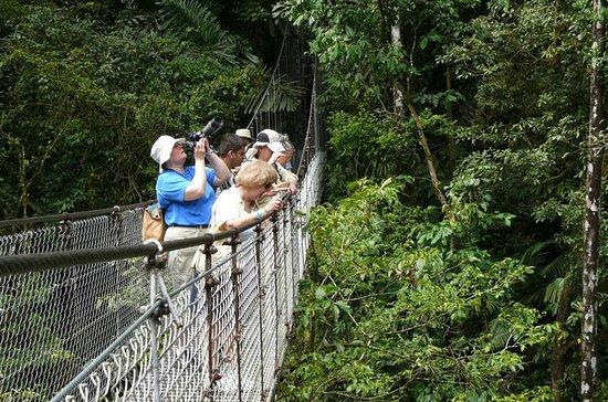 Arenal Hanging Bridges in Mistico Park