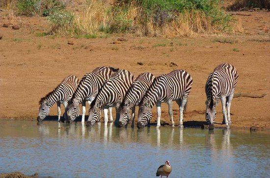 Pilanesberg Day Tour from...