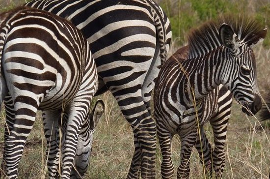 11-Day Safari Adventure in Southern...