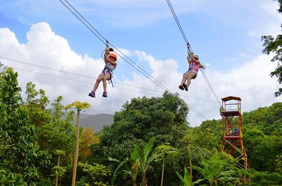 Zipline Canopy Adventure Tour from...