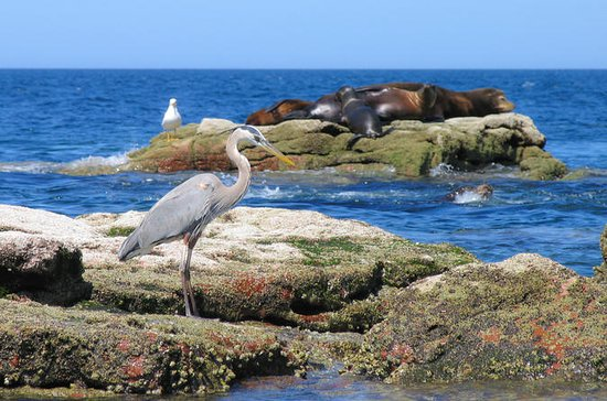 La Paz 3-Day Marine Life Adventure...