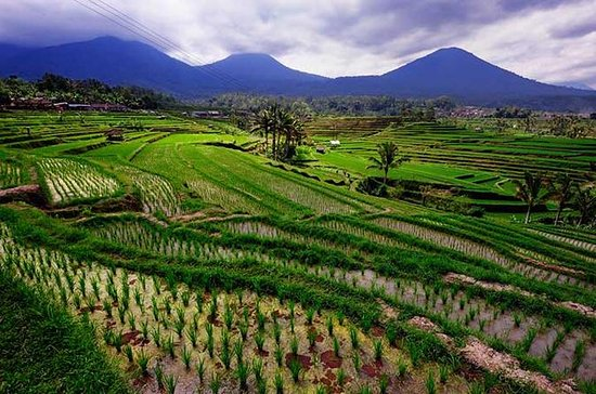 Private Full-Day Bedugul Village and...