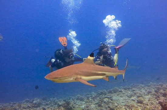 10-Day Diving and Sailing Cruise from...