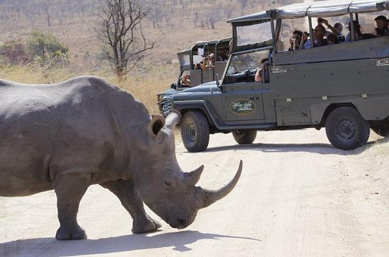 Full-Day Kruger Park Open Vehicle...