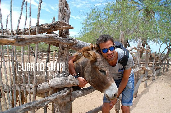 Vandreture i Baja-halvøen med en æsel