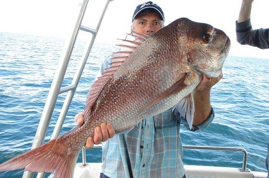 Gold Coast Half-Day Fishing Charter