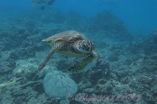 Introduction to Scuba Diving in Oahu ...