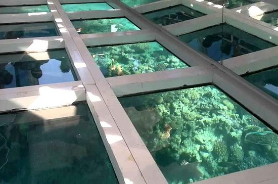 Glass Bottom Boat Tour fra Sharm El...
