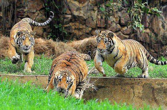 Excursión privada al zoológico de...