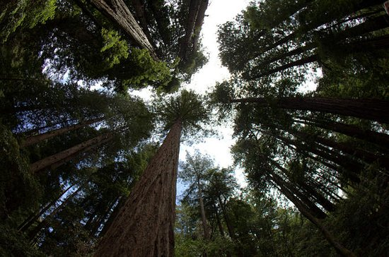 Combo Tour: Muir Woods and Sausalito...