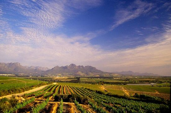 Half-Day Cape Winelands Tour from...