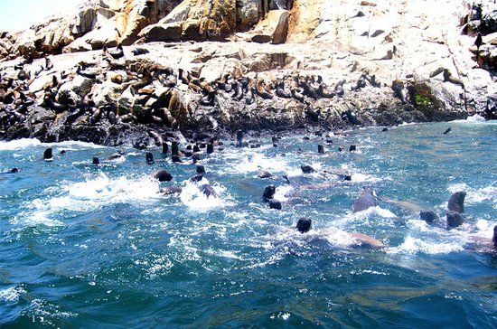 Palomino Islands Cruise and Sea Lion...