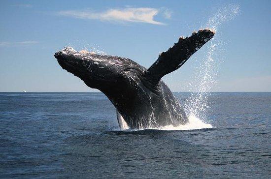 Walbeobachtungstour auf der Halbinsel...