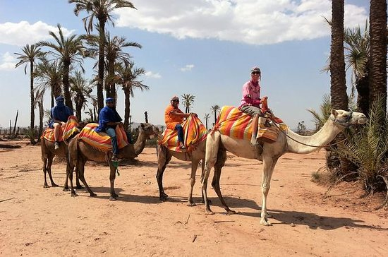 Sunset Camel Ride Tour in Marrakech...