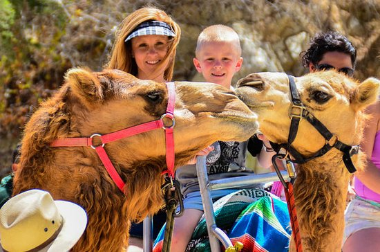 Camel Rde and Animal Sanctuary Tour ...