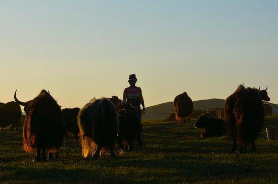 12-Day Tibet Nomad Adventure